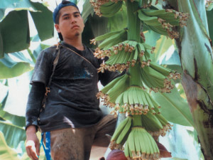 banana picker