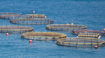 fish farms in the ocean