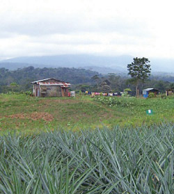 Home of a cooperative member in northern Costa Rica