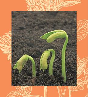 Image of sprouts coming out of the soil. Cover artwork for March 2006 Sound Consumer
