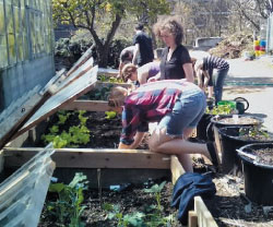 Student workparty on the farm