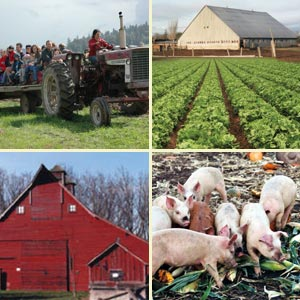 farm collage
