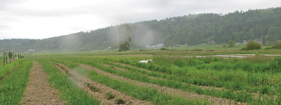 Panaramic view of Ames Creek Farm
