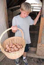 William Huesby collecting eggs.