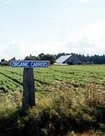 Organic carrot sign at Dungness Organic Produce in Sequim, Wash.