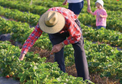 Farm Worker Pesticide Project