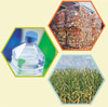Three images - plastic bottle, pallets of crushed plastic, field of corn