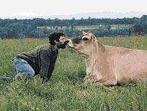 man kissing cow