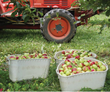 apples in containers