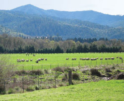 Umpqua Valley