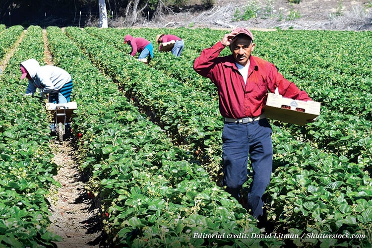 farm migrant workers