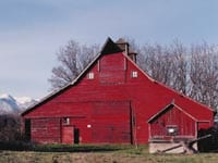 The Hyer Barn and its resident barn owl -- part of a historic farmstead.