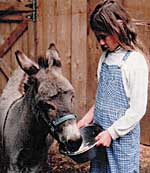 Sunfield school girl feeding donkey.