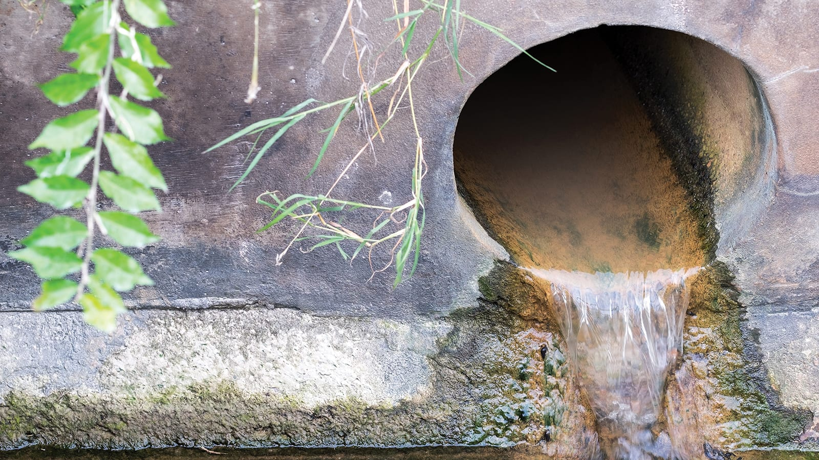 a culvert draining water