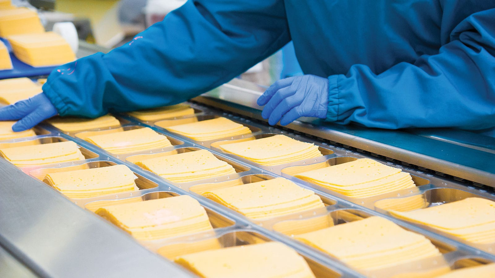 Worker handling sliced cheese in a production line at a U.S. cheesemaking factory.