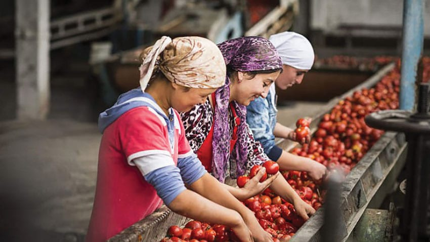 Workers sort organic produce in Kyrgyzstan (sustainablepulse.com).