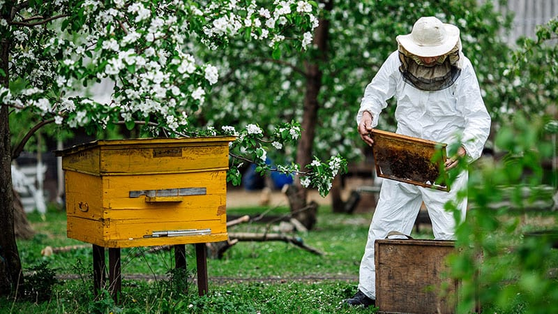A beefarmer tending to bee hives.