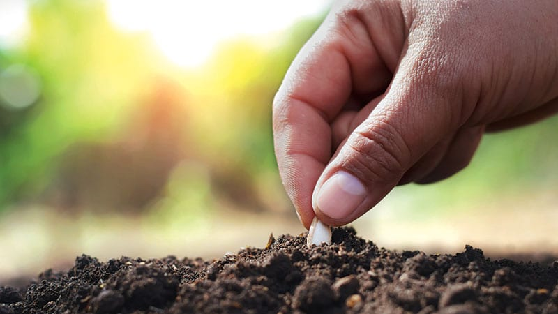 Hand carefully planting a single seed in the dirt.