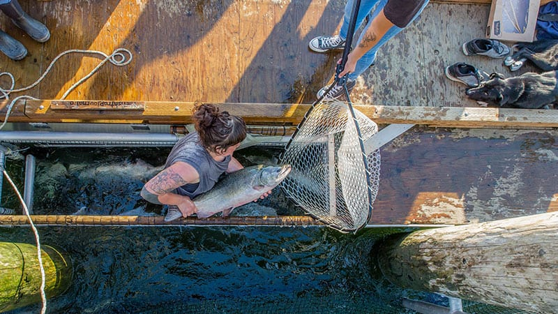 Environmental Stewardship Grant Winner: Wild Fish Conservancy. Photo credit, Aaron Joregenson.