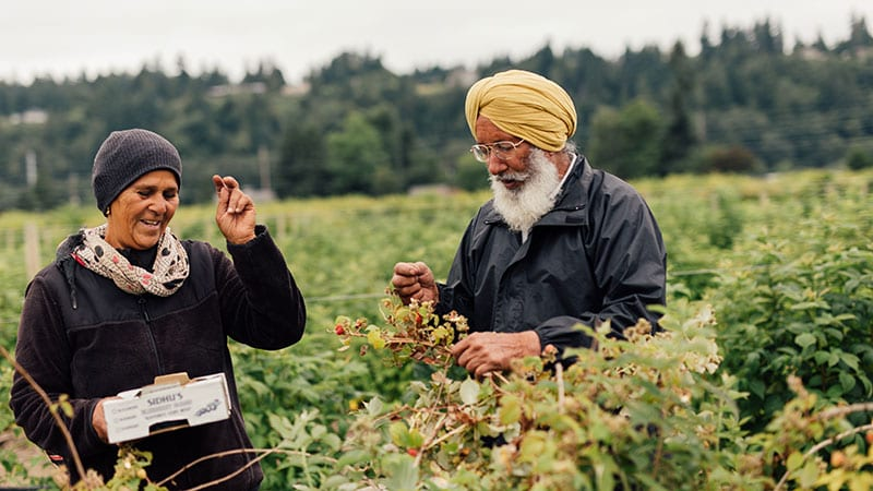 Farmers picking berries at Sidhu's Farm. Photo by Rylea Foehl courtesy of Pierce County Fresh.